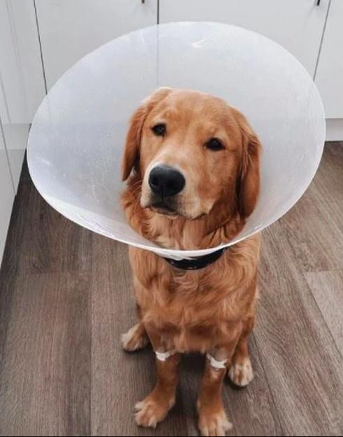 Наушники Apple оказались в желудке собаки, но «выжили»