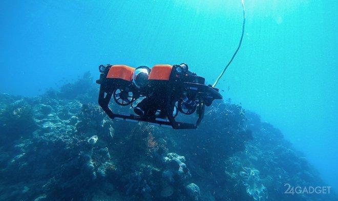 Teleportal разрешил всем желающим в онлайн режиме управлять подводным дроном в Большом Барьерном рифе