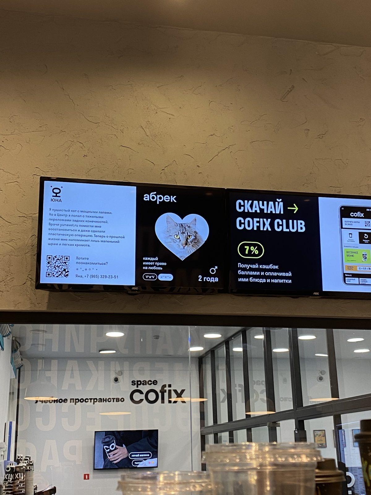 На экранах российских кофеен будут показывать российских животных из приюта