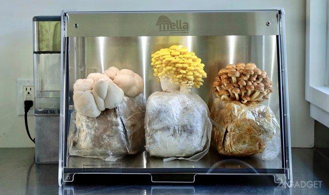 Умная биокамера Mella для домашнего выращивания грибов (2 фото + видео)