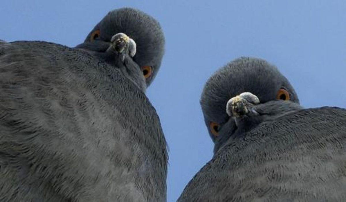 В России начнут штрафовать за кормление птиц