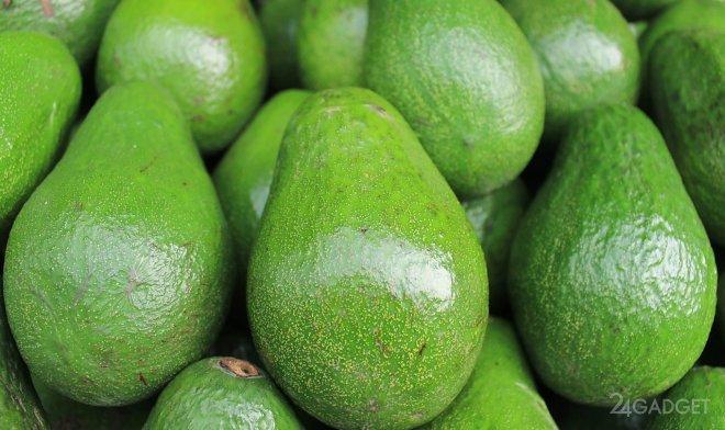 Выявлена корреляция курса биткоина и авокадо