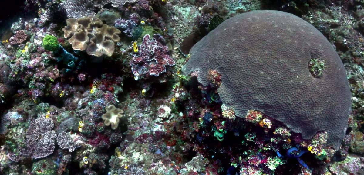Компьютер научился «убирать» воду с подводных фотографий