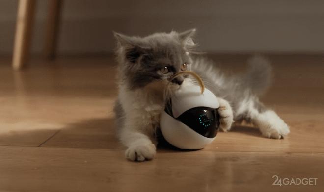Робот-компаньон Ebo для вашей кошки