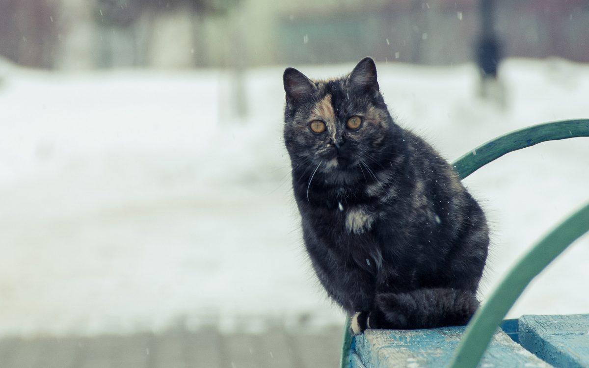 Исследование: в холодную погоду мы более общительны